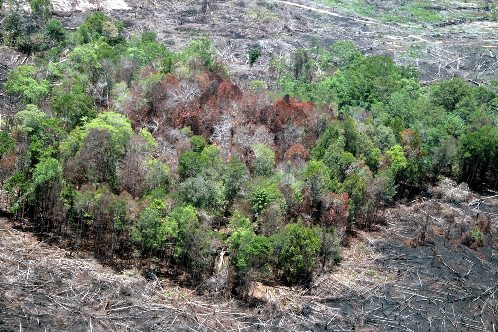Improving governance of land and forest based extractive sector in Indonesia